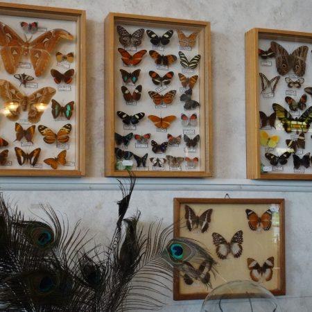 vlinderdozen