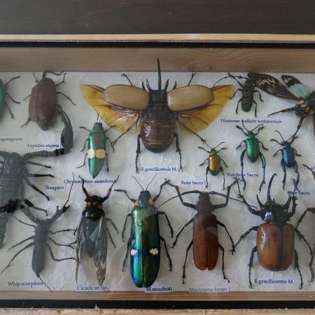 insectendoos