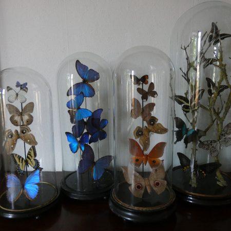opgezette vlinders