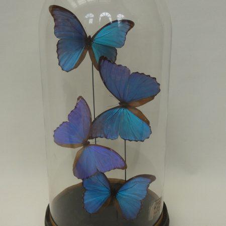 vlinderstolp