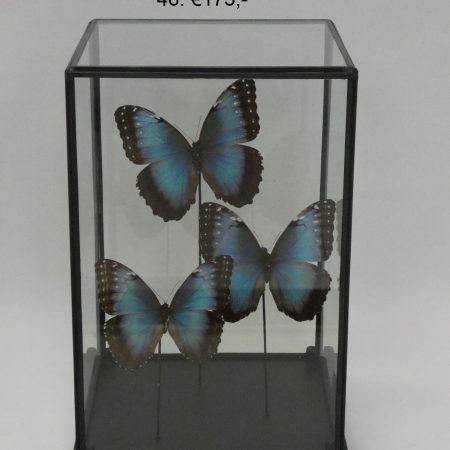 stolp met vlinders