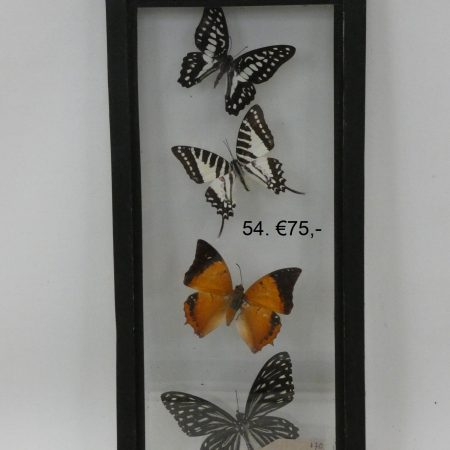 kastje met vlinders